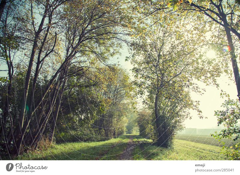 Waldrand Natur grün Pflanze Baum Landschaft Wald Umwelt natürlich Schönes Wetter