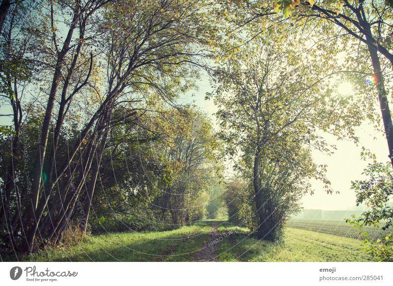 Waldrand Umwelt Natur Landschaft Sonnenlicht Schönes Wetter Pflanze Baum natürlich grün Farbfoto Außenaufnahme Menschenleer Tag Sonnenstrahlen Weitwinkel