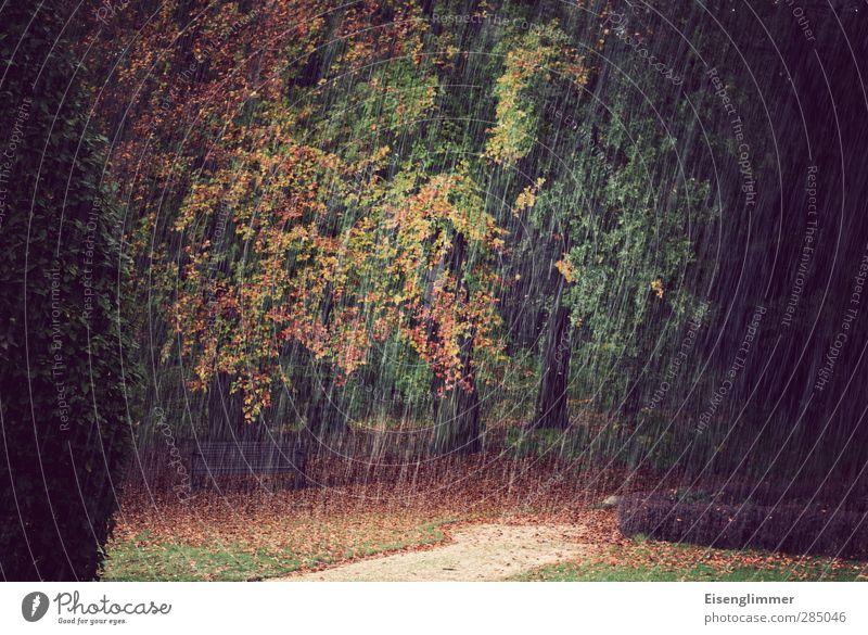 [wpt HH 10.12] Herbstschauer Baum Blatt Umwelt Wiese Wege & Pfade Park Regen Idylle Bank Regenwasser Herbstlaub herbstlich Herbstfärbung Laubbaum Hagel Konifere