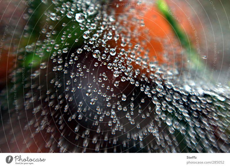Grüße aus dem Spinnennetz Natur Wald Regen Wetter glänzend Ordnung frisch nass Wassertropfen viele Netzwerk Tropfen Verbindung Momentaufnahme Tau
