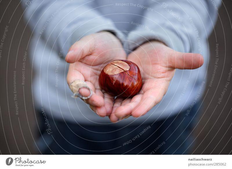 den Herbst in Händen Kind Kleinkind Hand 1 Mensch 3-8 Jahre Kindheit Natur Hemd Pullover beobachten berühren Fröhlichkeit Glück niedlich schön blau braun Freude