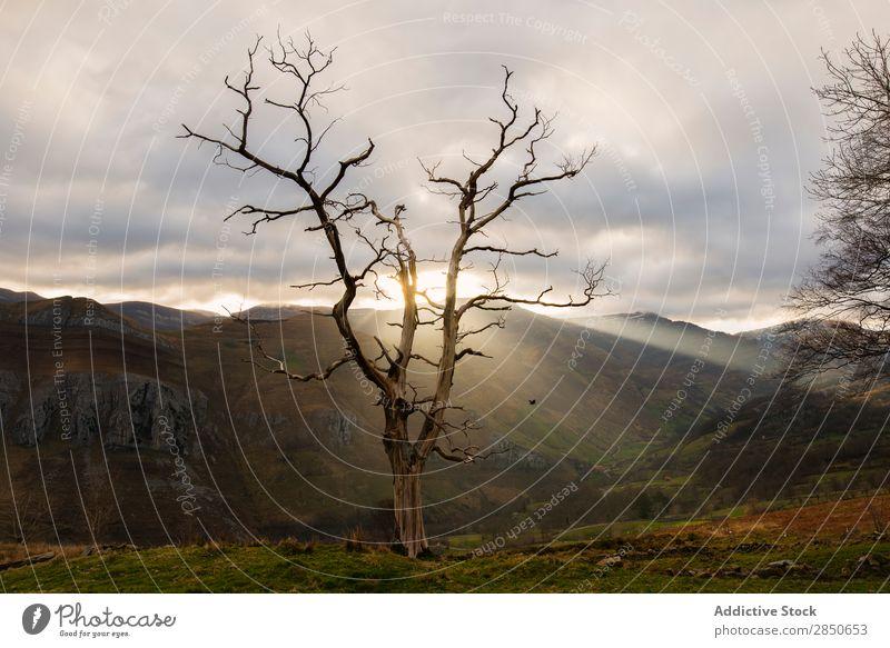 Sonne scheint durch blattlosen Baum Landschaft unverhüllt Natur ruhig natürlich ländlich Berge u. Gebirge herbstlich Farbe Szene Stimmung laublos Morgen