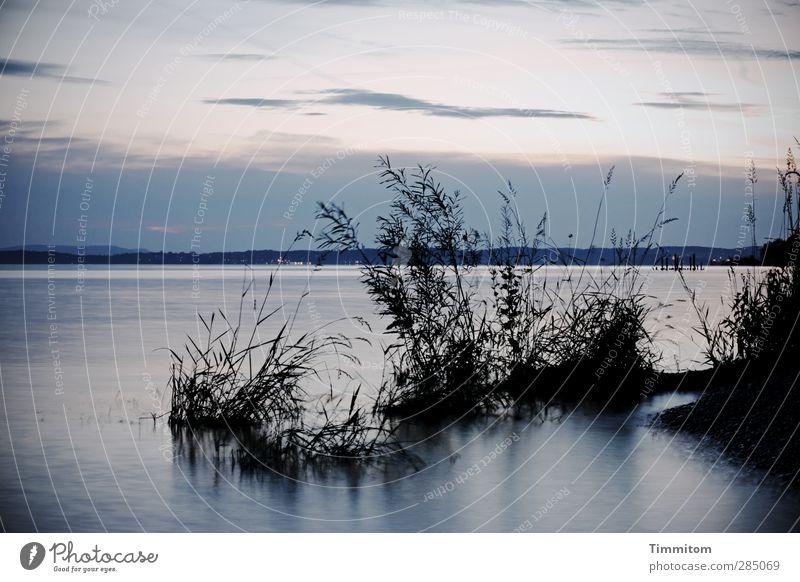 glücklich   da stehen und Muße haben Ferien & Urlaub & Reisen Umwelt Natur Landschaft Wasser Himmel Wolken Nachthimmel Sträucher Seeufer Bodensee Blick