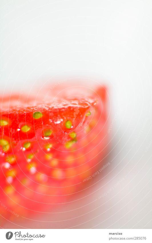 Erdbeere rot Farbe Erotik Kunst Frucht Lebensmittel süß Kreativität Duft Bioprodukte exotisch saftig Erdbeeren Vegetarische Ernährung Reinheit
