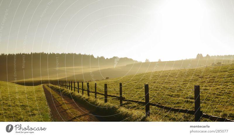 glücklich | den morgen erleben... Himmel Natur grün Sonne Landschaft Wald Umwelt Wärme Wiese Herbst Gras Holz Glück Freiheit Horizont Wetter