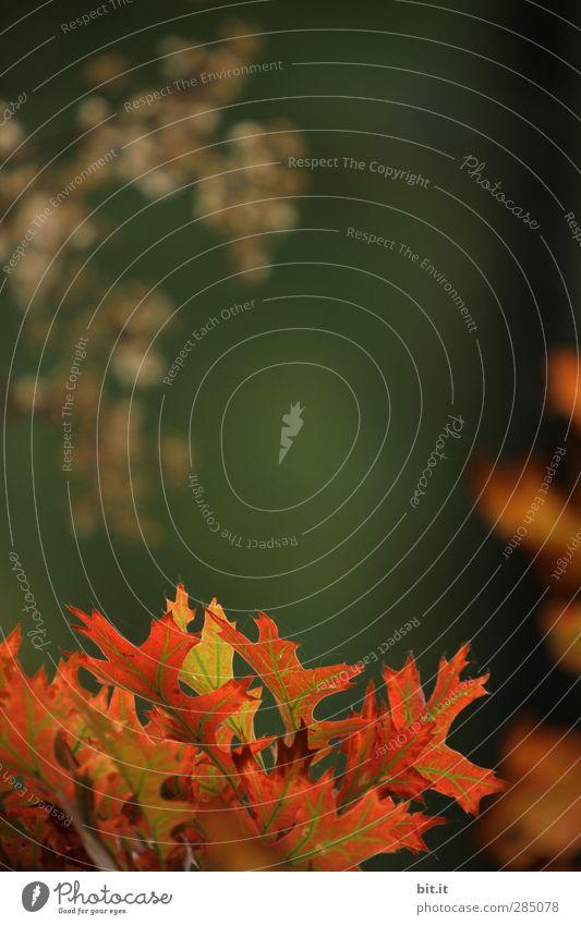 glücklich | Glück am Bärensee... Umwelt Natur Pflanze Herbst Klima Schönes Wetter Blume Sträucher Grünpflanze Garten Park Wald leuchten dunkel Wärme grün rot