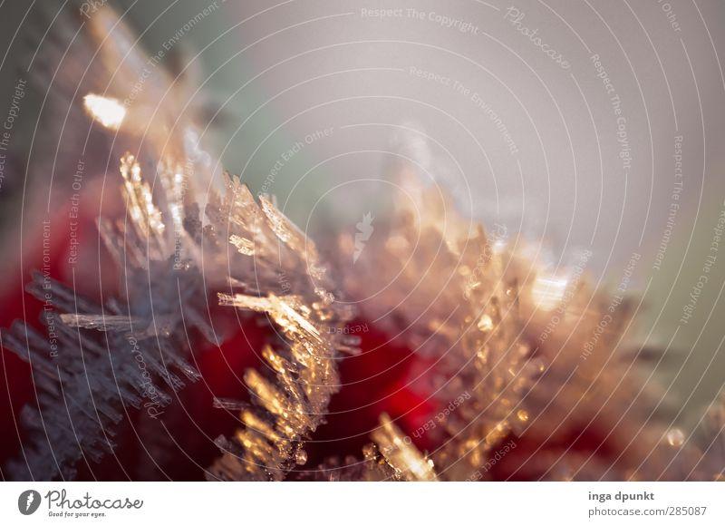 Eisige Strahlen Umwelt Urelemente Winter Frost Raureif kalt Natur Jahreszeiten Reflexion & Spiegelung Beleuchtung Lichterscheinung Strahlung frieren Farbfoto