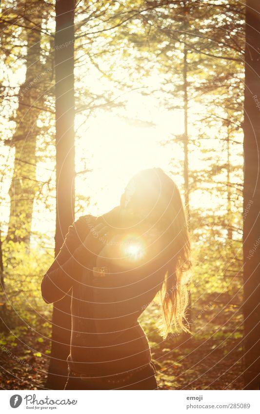 herbst feminin Junge Frau Jugendliche 1 Mensch 18-30 Jahre Erwachsene brünett langhaarig gelb gold Wald Farbfoto Außenaufnahme Abend Licht Lichterscheinung
