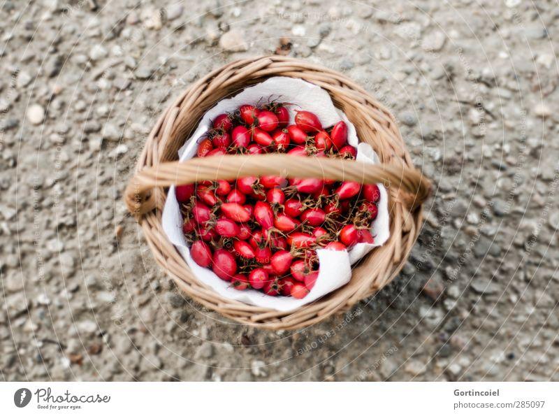Hagebutten Natur rot Herbst grau natürlich Frucht frisch Ernte Sammlung Bioprodukte herbstlich Korb Hagebutten