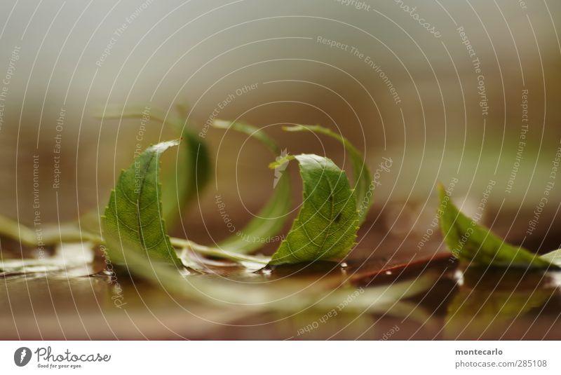 formation Umwelt Natur Pflanze Herbst Blatt Grünpflanze Wildpflanze ästhetisch dünn authentisch einfach nass natürlich Spitze weich braun grün Farbfoto