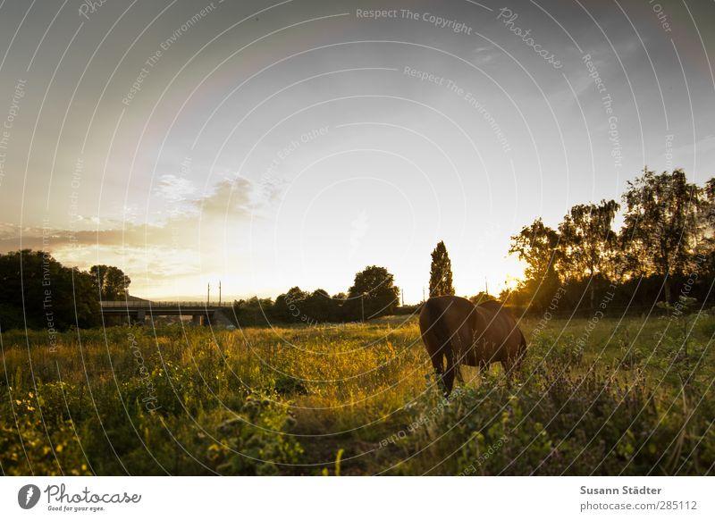 * Himmel Tier Liebe Wiese Feld Wildtier Energie Warmherzigkeit Brücke einzigartig Pferd Ende entdecken Fressen Leichtigkeit herbstlich