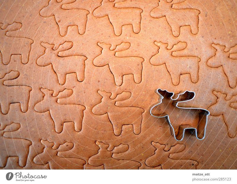 Einsames Rentier in einer Rentier-Herde Lebensmittel Teigwaren Backwaren Dessert Süßwaren Plätzchen Ernährung stechen Tier Elch tierisch Weihnachten & Advent