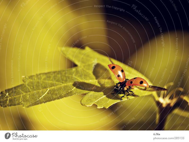 """""""Ladybird"""" grün schön Sommer Tier schwarz gelb Umwelt Herbst klein Garten Park natürlich fliegen orange Wildtier wandern"""