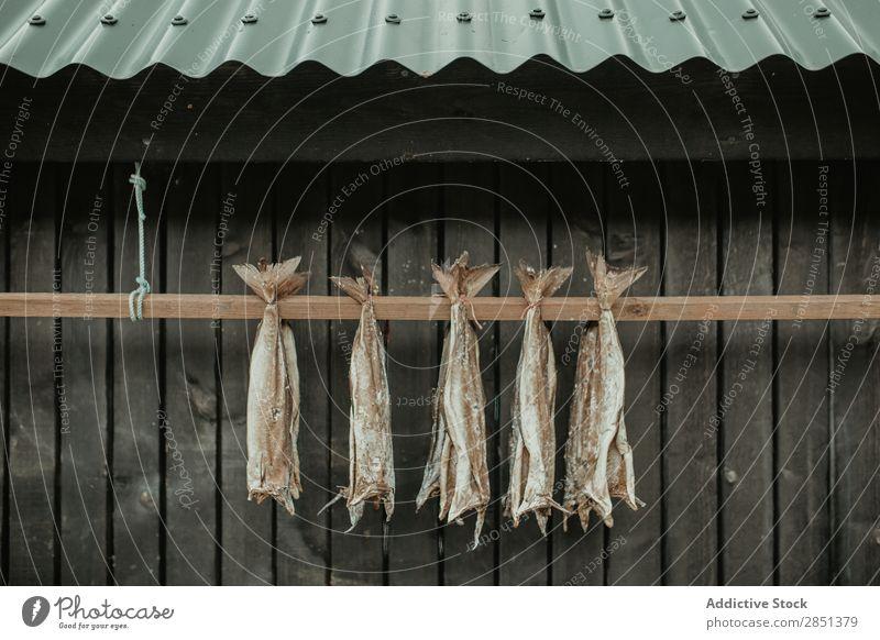 Getrockneter Fisch, der an einer Holzpflanze hängt. Trocknung Außenaufnahme ländlich Landschaft Haus Außenseite regenarm Tradition Lebensmittel Reihe Gesundheit