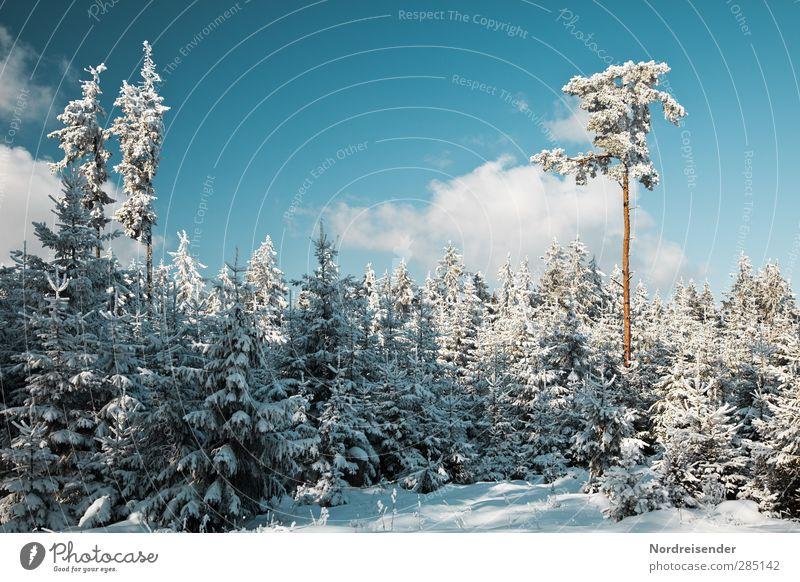 Winter Sinnesorgane ruhig Natur Landschaft Himmel Wolken Schönes Wetter Eis Frost Schnee Baum Wald blau weiß Idylle Leichtigkeit rein stagnierend Stimmung