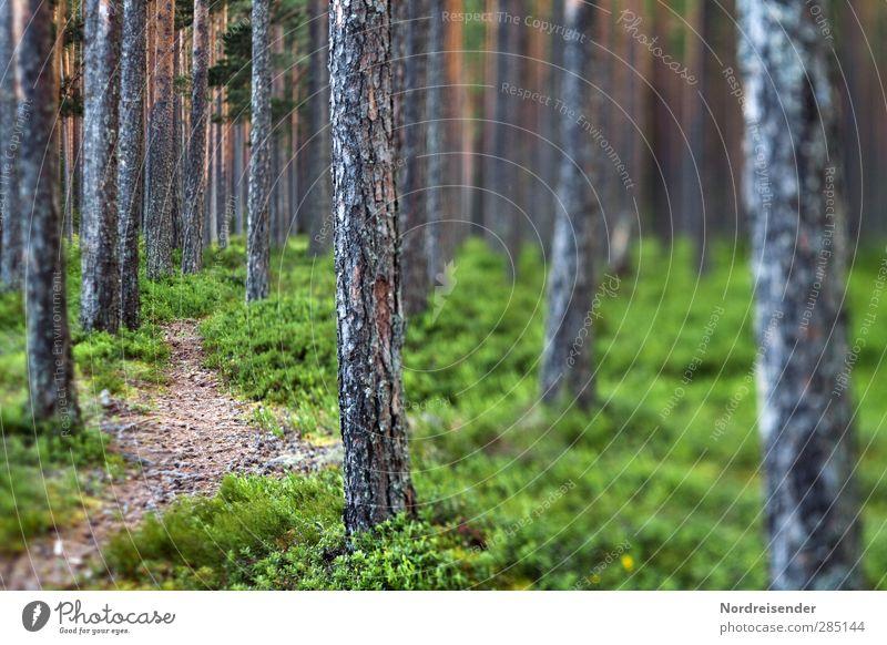 Wege finden... Natur grün Sommer Baum ruhig Wald Holz träumen Stimmung braun außergewöhnlich Angst Abenteuer bedrohlich Ewigkeit Krankheit