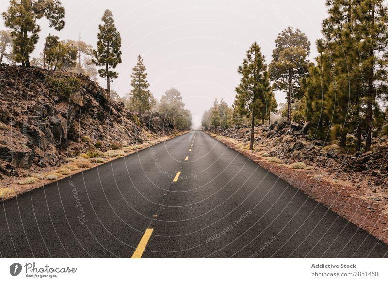 Straße, die in Felsen wegläuft. Autobahn reisend Tourismus Sommer Landschaft Ferien & Urlaub & Reisen Ausflug Natur Kurve Klippe Aussicht Baum ländlich