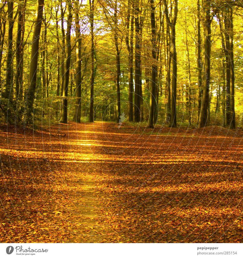 auf dem pfad bleiben wandern Natur Landschaft Pflanze Erde Herbst Schönes Wetter Baum Blatt Wald Wege & Pfade Diät Blühend verblüht dehydrieren trocken braun