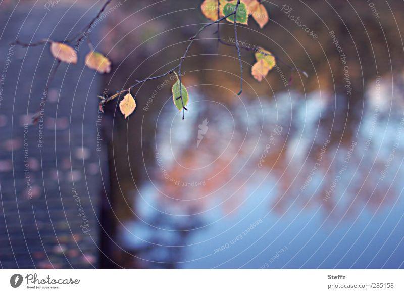 Herbst am Teich Herbstgefühl Steg Herbstlaub November Romantik ruhig Vergänglichkeit vergänglich Brücke Jahreszeiten Novemberstimmung Spiegelung braun Stimmung