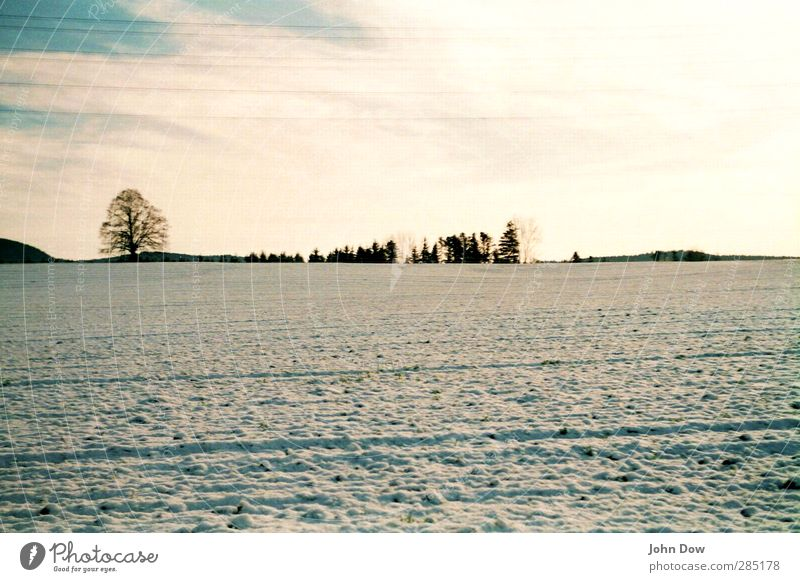 Winter Landschaft Himmel Horizont Eis Frost Schnee Baum Sträucher Wiese Feld kalt Schneelandschaft Schneedecke Winterschlaf Wintermorgen Winterstimmung Ferne