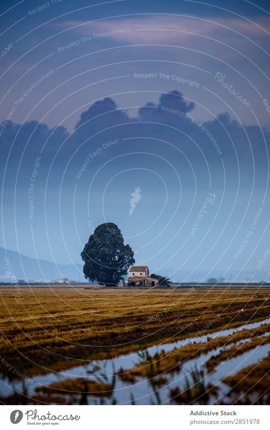 Landhaus bei Sonnenaufgang Länder Haus Baum blau Landen Wolken ruhig Delta ebro mediterran Spanien Wasser Natur Landschaft Himmel natürlich Park