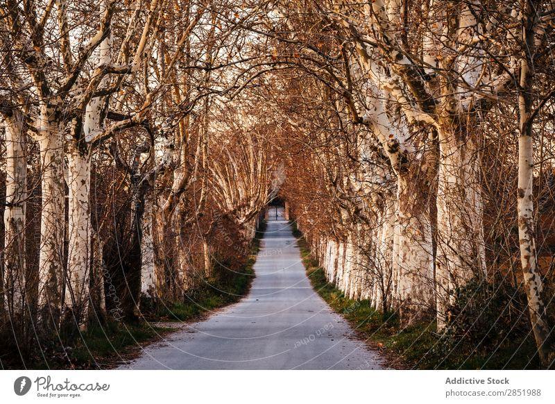 Straße der Bäume Sonnenuntergang Park Wege & Pfade Baum Herbst Natur schön Außenaufnahme Licht Morgen Landschaft Wald Sonnenlicht Sonnenaufgang rennen