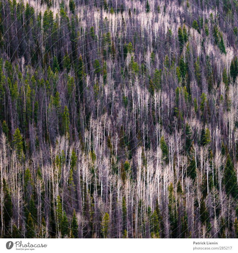No Ceiling Natur Pflanze Baum Landschaft Wald Umwelt Berge u. Gebirge Stimmung träumen Klima Urelemente Netzwerk USA Hügel skurril Symmetrie