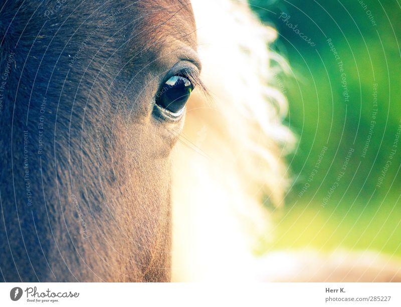 From The Horse's Eye Tier Pferd Tiergesicht 1 ästhetisch außergewöhnlich Neugier niedlich klug braun mehrfarbig grün Stimmung Sympathie Identität träumen Würde