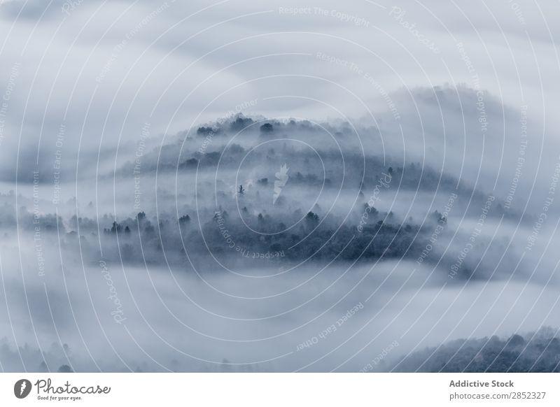 Nebel in Tavernet, Barcelona, Spanien Fluggerät Wald Aussicht Morgen Natur tropisch Umwelt natürlich Thailand Hintergrundbild Baum Urwald geschlossen Park Regen