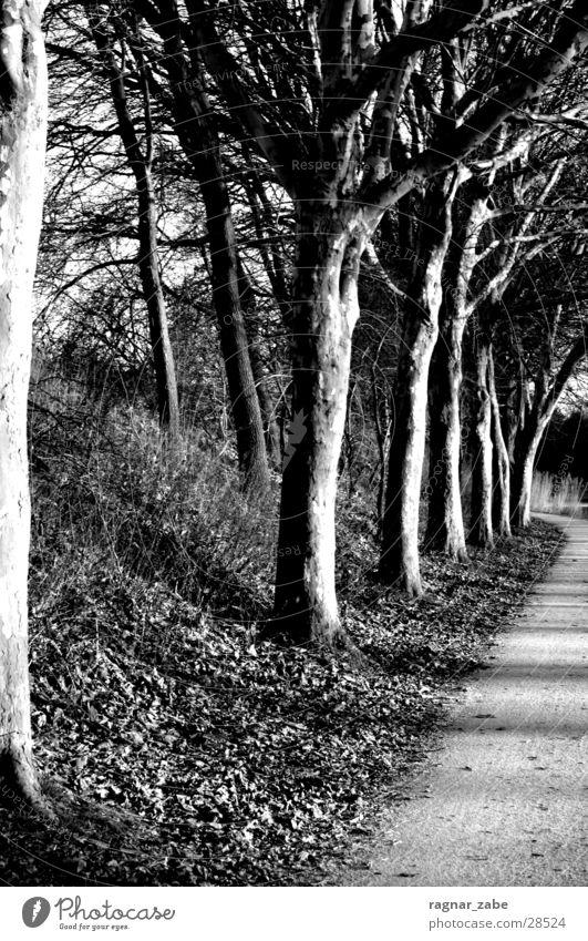ruhe vor dem sturm weiß Baum schwarz Traurigkeit Wege & Pfade Abwasserkanal Landkreis Emsland