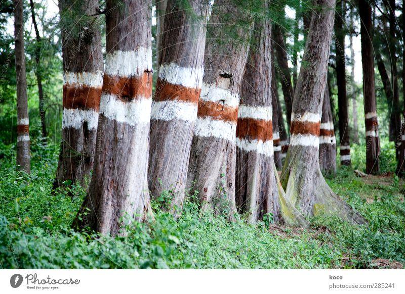 rot, ich weiß, rot. Umwelt Natur Landschaft Pflanze Baum Park Wald Herde Schilder & Markierungen Linie Streifen stehen Wachstum einfach fest groß hoch natürlich