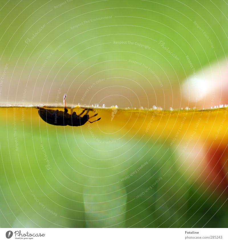 Einfach nicht abzuschütteln Natur grün Pflanze Blatt Tier schwarz gelb Umwelt Herbst klein natürlich Schönes Wetter Insekt Herbstlaub Käfer herbstlich