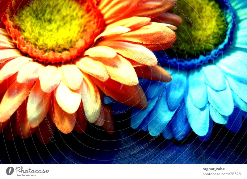 flower power Blume blau orange gestellt