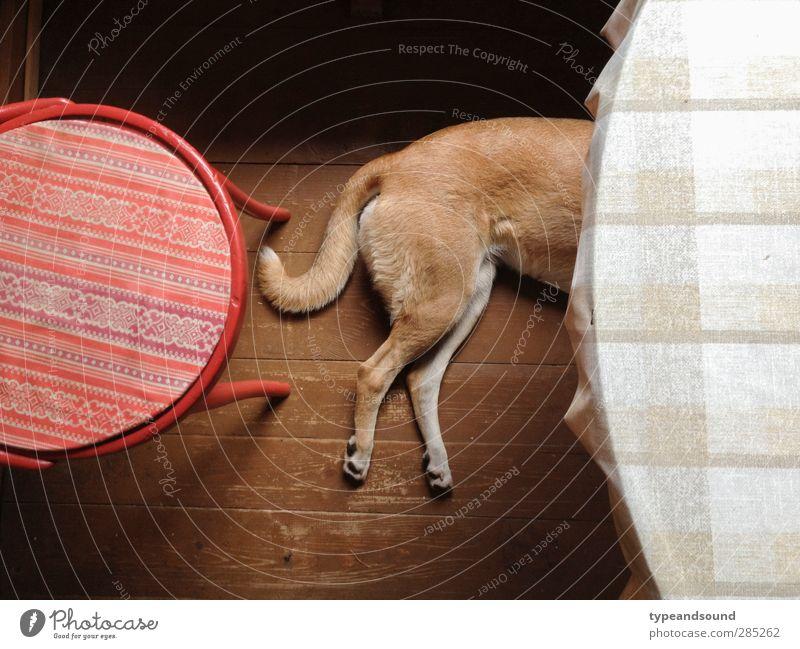 Russischer Küchenhund Tier Haustier Hund 1 Holz Kreis Denken Erholung genießen liegen schlafen träumen einfach natürlich braun rot Gefühle Geborgenheit