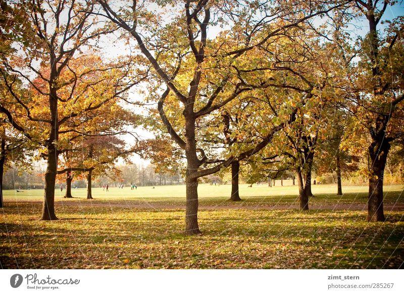 Ein Herbsttag Mensch Natur blau grün Baum Erholung ruhig gelb Wiese natürlich braun Park Zufriedenheit leuchten wandern