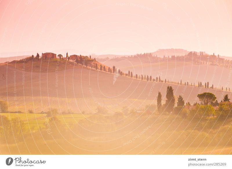 dreaming in tuscany Natur Ferien & Urlaub & Reisen grün Baum ruhig Landschaft Ferne Wärme Herbst Horizont Kunst rosa Feld Zufriedenheit Tourismus Ausflug