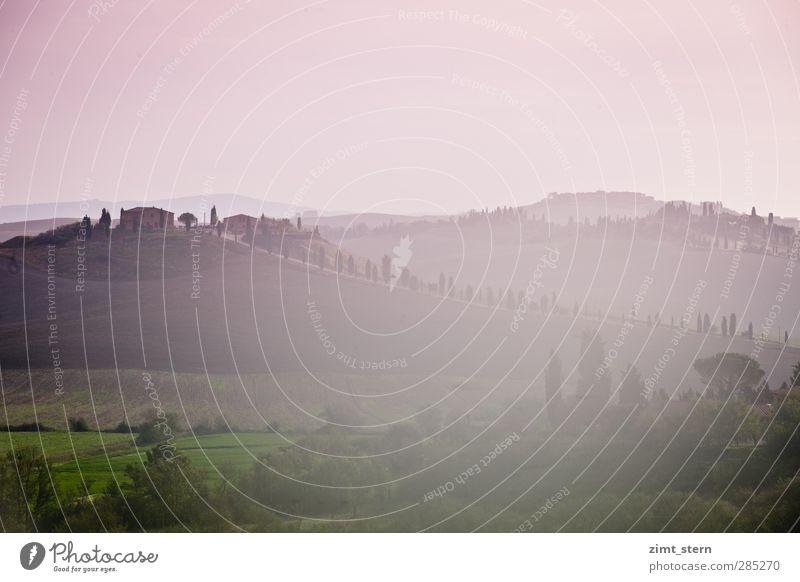 dreaming in tuscany II Natur Ferien & Urlaub & Reisen Baum Einsamkeit Landschaft Erholung Ferne Wiese Gras träumen Kunst rosa Zufriedenheit Tourismus Ausflug