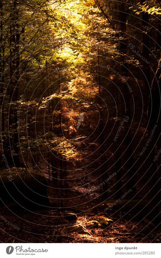 ...Licht fällt ein Natur Pflanze Baum Landschaft Wald Umwelt Herbst außergewöhnlich natürlich Hoffnung fantastisch Herbstlaub Inspiration Laubwald Mischwald