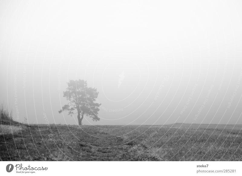verlorener Horizont weiß Baum schwarz dunkel Herbst Gras Feld Nebel mystisch schlechtes Wetter