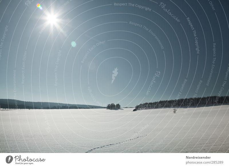 Wintersonne Freiheit Schnee Winterurlaub wandern Sonne Schönes Wetter Wald Fährte Erholung glänzend frei frisch blau weiß Vorfreude ruhig Einsamkeit erleben