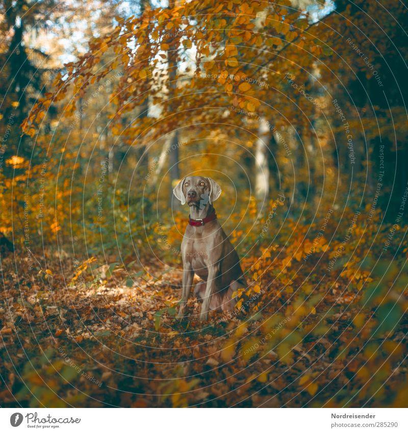 Feines Mädchen Hund Natur Tier Landschaft Wald Herbst Leben Traurigkeit Freundschaft Freizeit & Hobby ästhetisch Schönes Wetter Kommunizieren beobachten Fitness