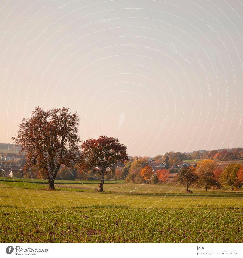 oktober Himmel Natur Pflanze Baum Landschaft Umwelt Herbst Gras natürlich Feld Dorf Grünpflanze Nutzpflanze