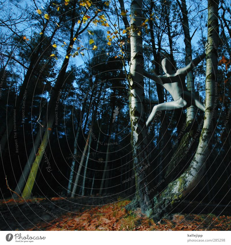 silberrücken Mensch Natur Mann Landschaft Wald Erwachsene Umwelt Herbst Mode Körper Haut maskulin Bekleidung Klettern Herbstlaub