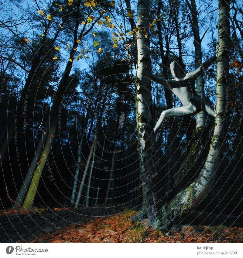 silberrücken Mensch Natur Mann Landschaft Wald Erwachsene Umwelt Herbst Mode Körper Haut maskulin Bekleidung Klettern Herbstlaub silber