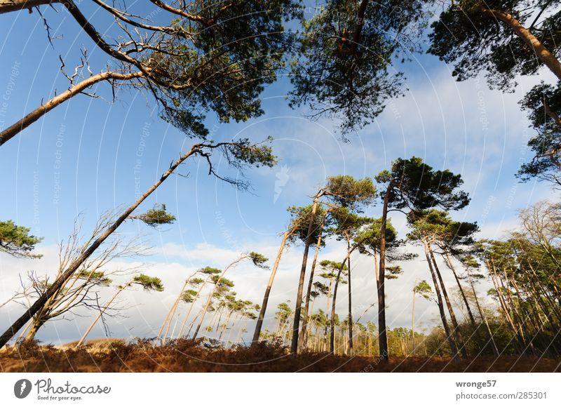 Windflüchter II Himmel Natur Ferien & Urlaub & Reisen Pflanze Baum Einsamkeit Landschaft Wald Herbst Gras Tourismus Insel Schönes Wetter Abenteuer einzigartig