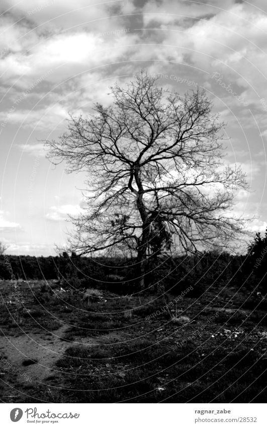 110 Baum ruhig Heide Einsamkeit Trauer Schwarzweißfoto Tod unbehagen Brand Landschaft Traurigkeit
