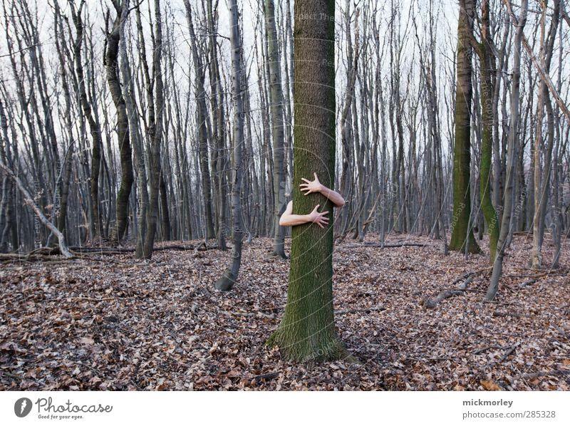 Natur genießen Mensch Hand Pflanze Baum Wald Umwelt Liebe Herbst Frühling Denken braun außergewöhnlich Kraft Erde authentisch