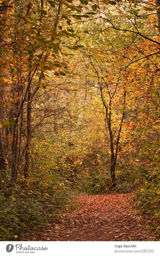 durch die Natur Umwelt Landschaft Herbst Laubwald Herbstlaub mehrfarbig Wald natürlich Wege & Pfade Spaziergang Spazierweg Fußweg wandern Außenaufnahme