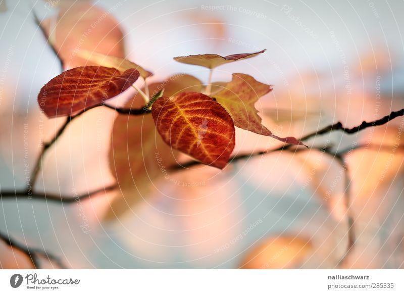Herbstblätter Natur Pflanze Baum Blatt Buche frisch schön braun mehrfarbig gelb grau Romantik träumen Umwelt Umweltschutz Ast Zweig Farbfoto Außenaufnahme