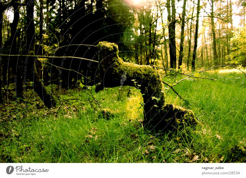 greening alt grün Wald Frühling Ast drehen April Baumstumpf
